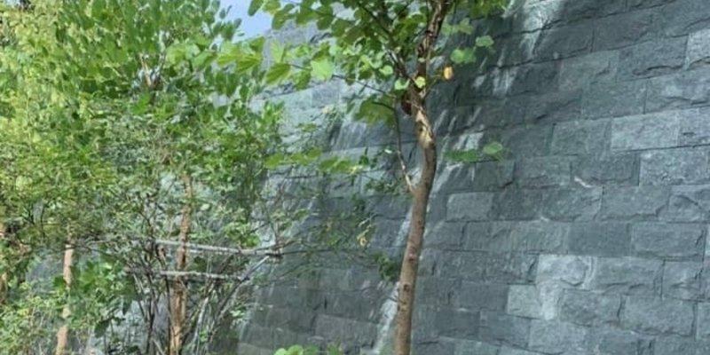 Đá tự nhiên bóc lồi xanh rêu ốp tường trang trí nội ngoại thất- Địa chỉ mua đá bóc xanh quận Hà Đông